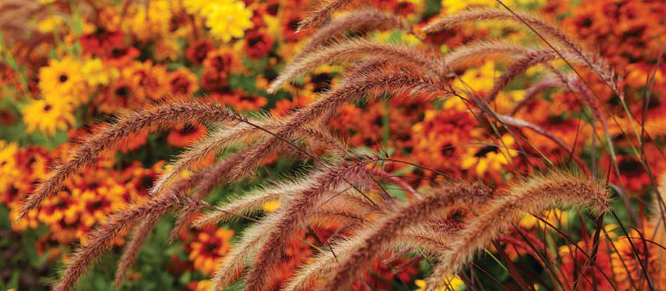 , Planting Ornamental Grasses, Redwood Nursery & Garden Center