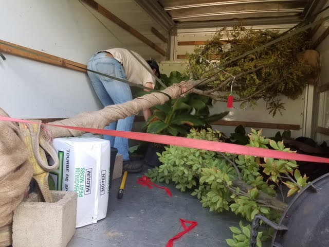 , Rent a Tree, Redwood Nursery & Garden Center