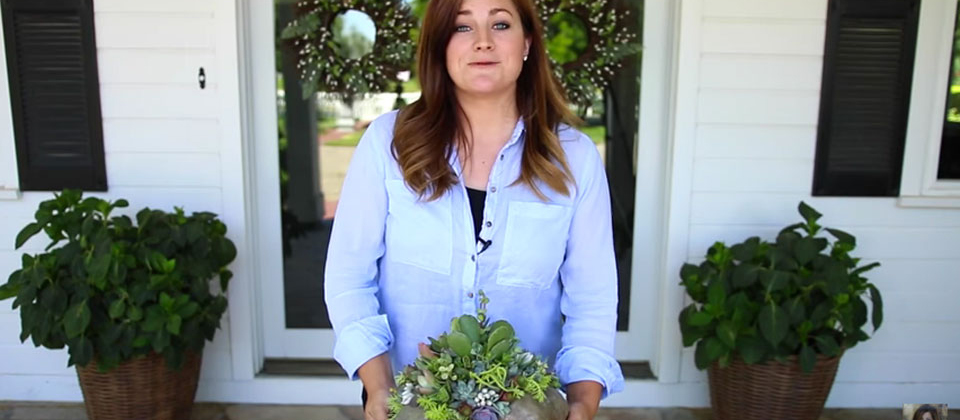 , Succulent Pumpkin Planter, Redwood Nursery & Garden Center