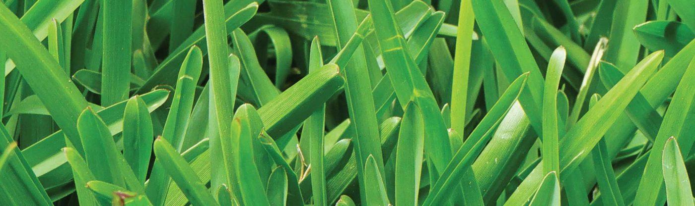 , A Greener Lawn Is In The Bag!, Redwood Nursery & Garden Center