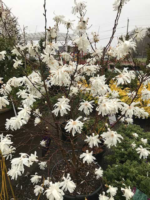 , Bower & Branch Special Offer, Redwood Nursery & Garden Center