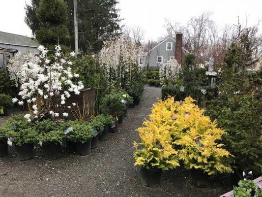 Garden Center, Garden Center, Redwood Nursery & Garden Center