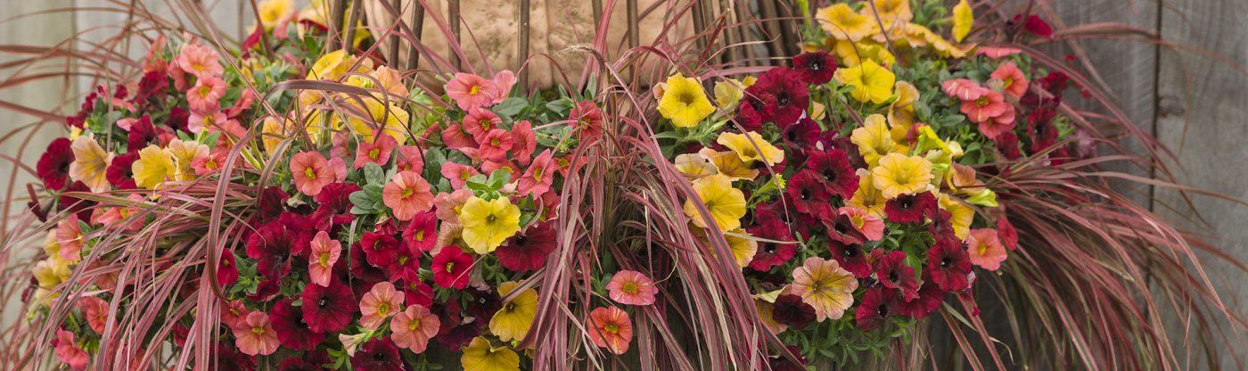 , Fall Container Garden Ideas, Redwood Nursery & Garden Center