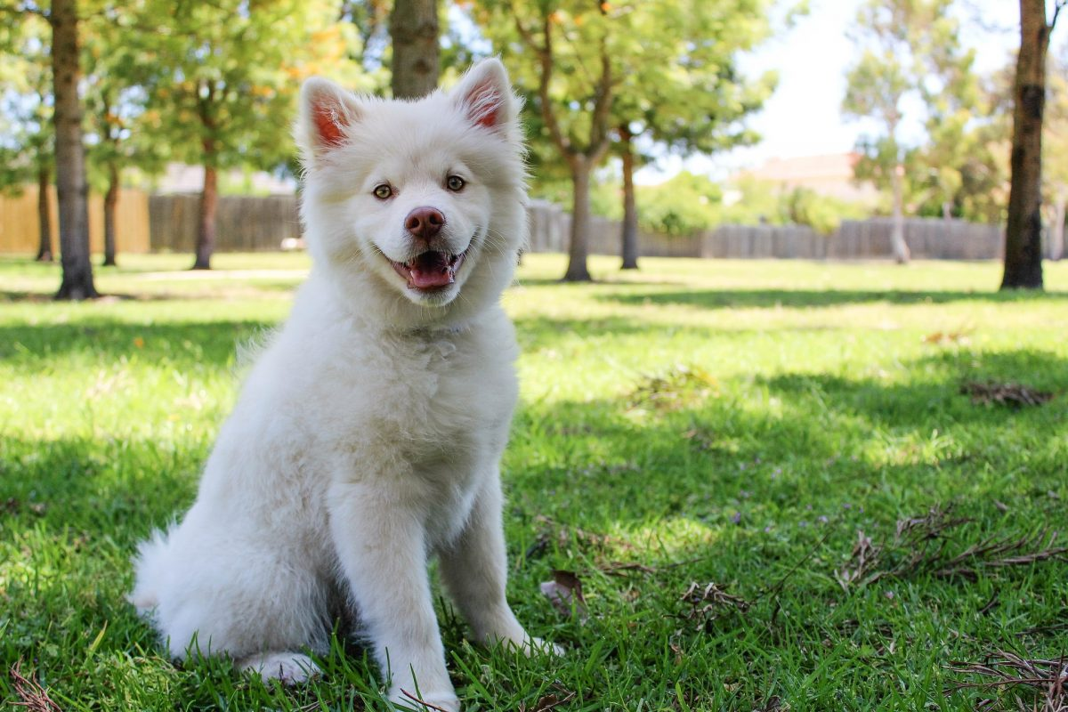 , Lawn Care Tips for the Dog Days of Summer, Redwood Nursery & Garden Center