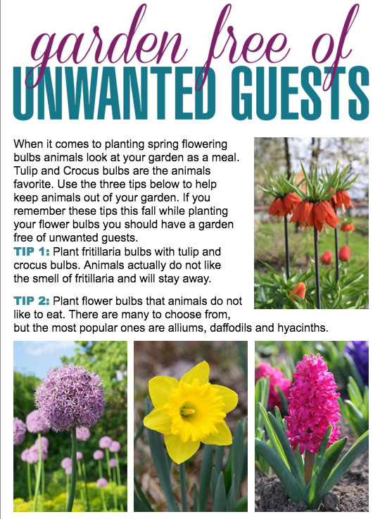 , Control Those Critters When Planting Bulbs, Redwood Nursery & Garden Center