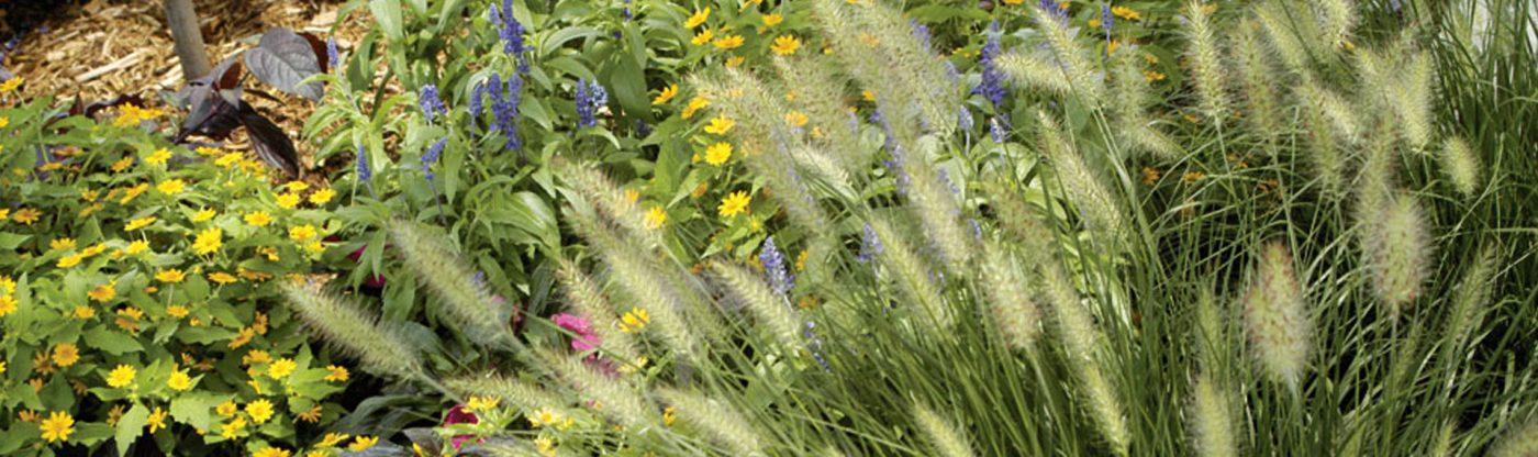 , Add These Fall Favorites, Redwood Nursery & Garden Center