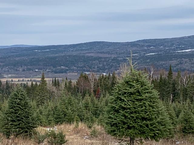 , Buy Trees, Redwood Nursery & Garden Center