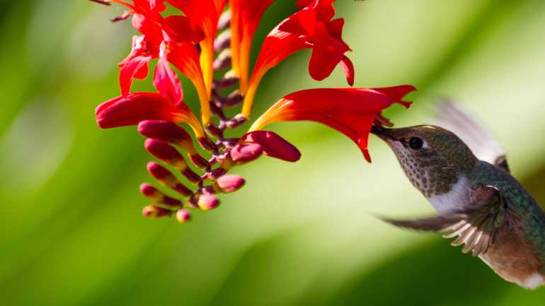 , Bower & Branch, Audubon Society Partner to Promote Bird-Friendly Plants, Redwood Nursery & Garden Center