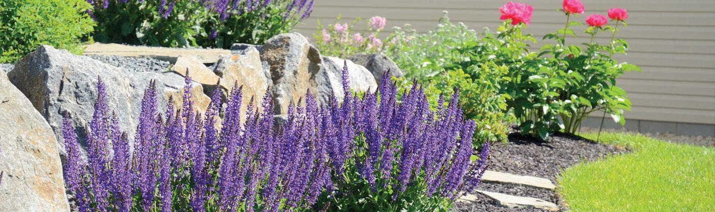 , Garden Questions & Answers, Redwood Nursery & Garden Center