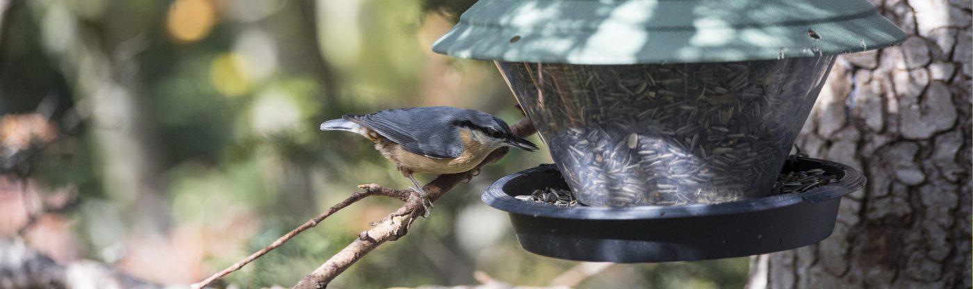 , How to AttractBirds, Redwood Nursery & Garden Center