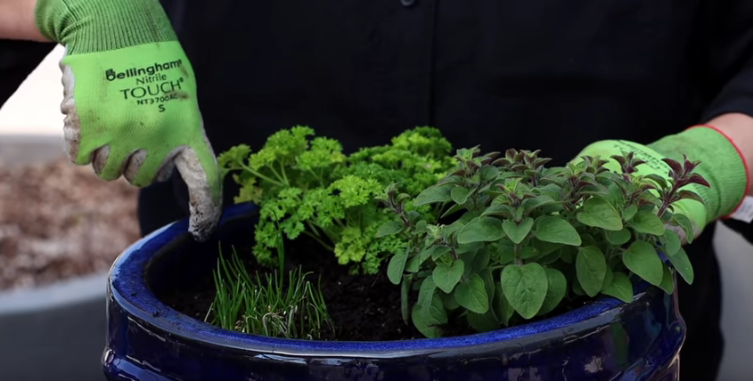 , Planting Herbs in Containers for Beginners, Redwood Nursery & Garden Center