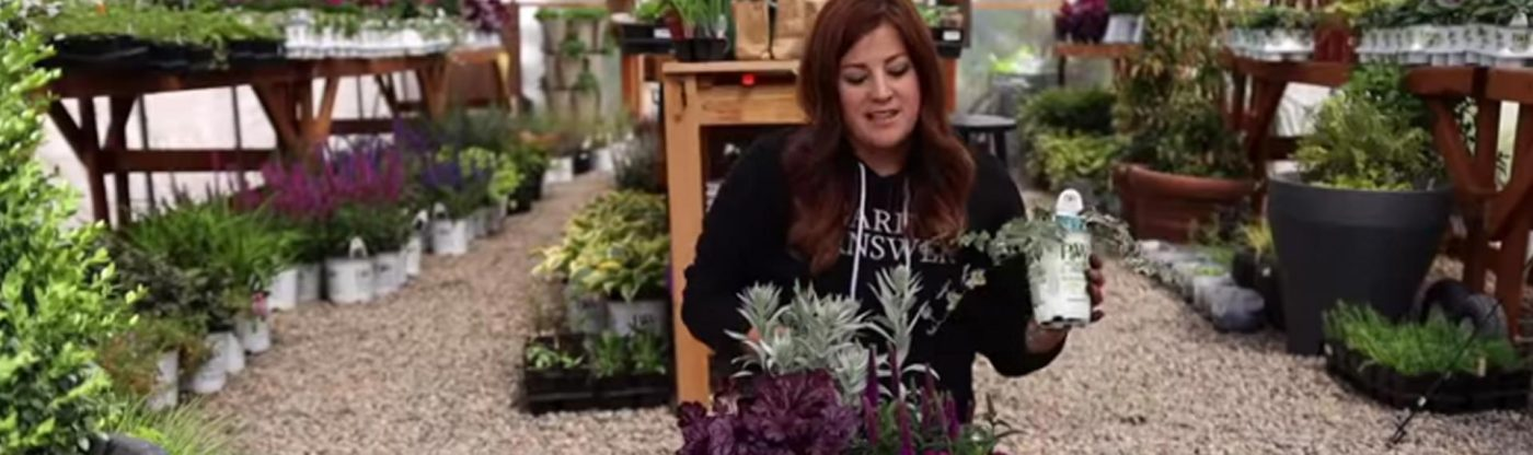 , Planting a Container Full of Cool Colors!, Redwood Nursery & Garden Center
