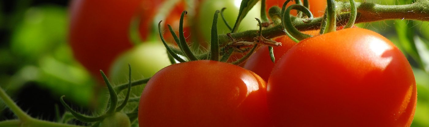 , 6 Simple Tips for Better Tomatoes, Redwood Nursery & Garden Center