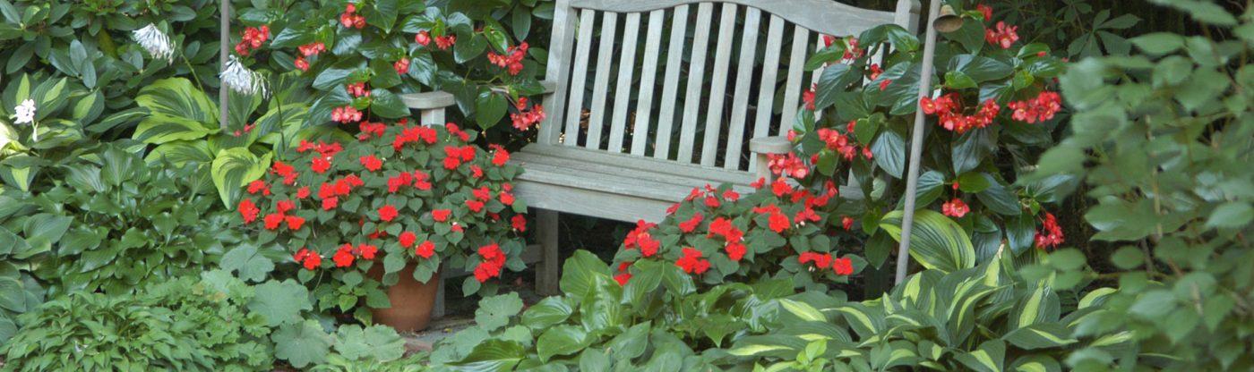 , Shade Gardening for Beginners, Redwood Nursery & Garden Center