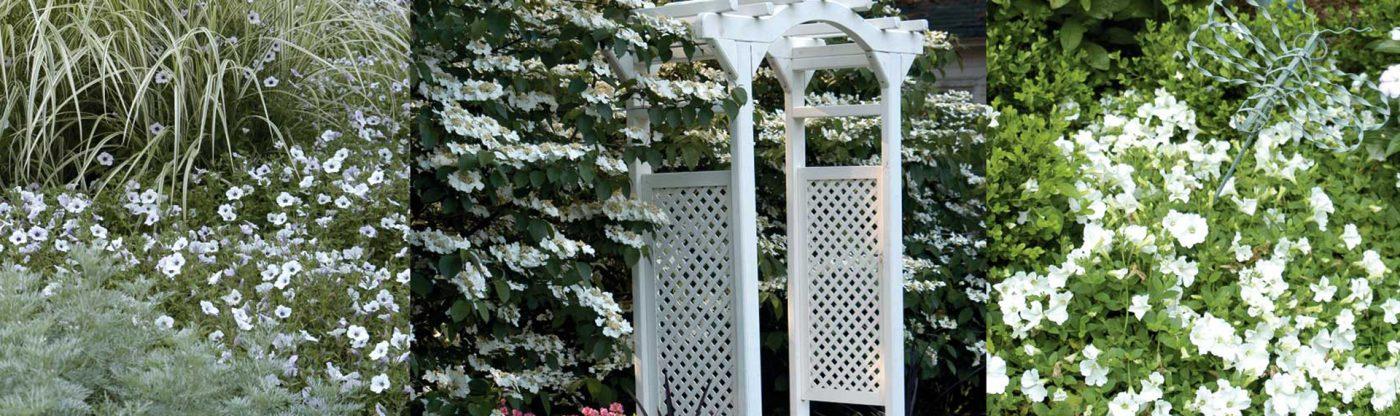 , Planting a Moon Garden, Redwood Nursery & Garden Center