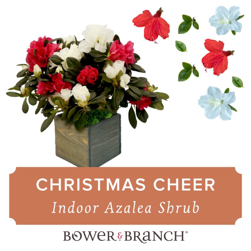 , Holiday Plant Gift Ideas, Redwood Nursery & Garden Center