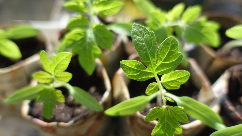 , Seeds of Joy, Redwood Nursery & Garden Center