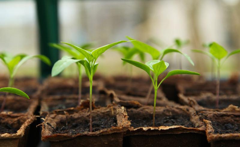 , Winter Sowing for 2021, Redwood Nursery & Garden Center