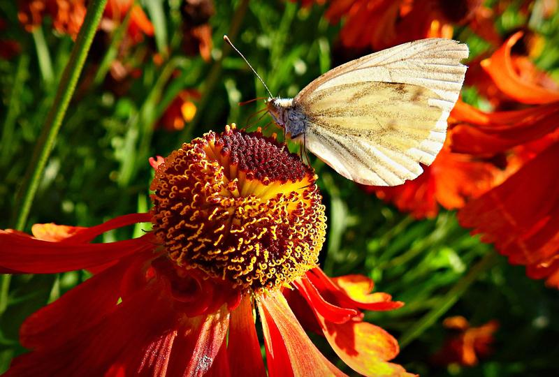 , All About Native Plants, Redwood Nursery & Garden Center