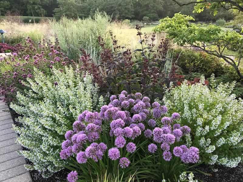 , 2021 Perennial Plant of the Year, Redwood Nursery & Garden Center