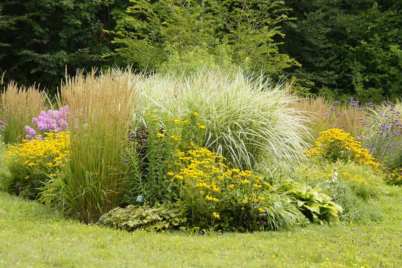, June is Perennial Gardening Month, Redwood Nursery & Garden Center