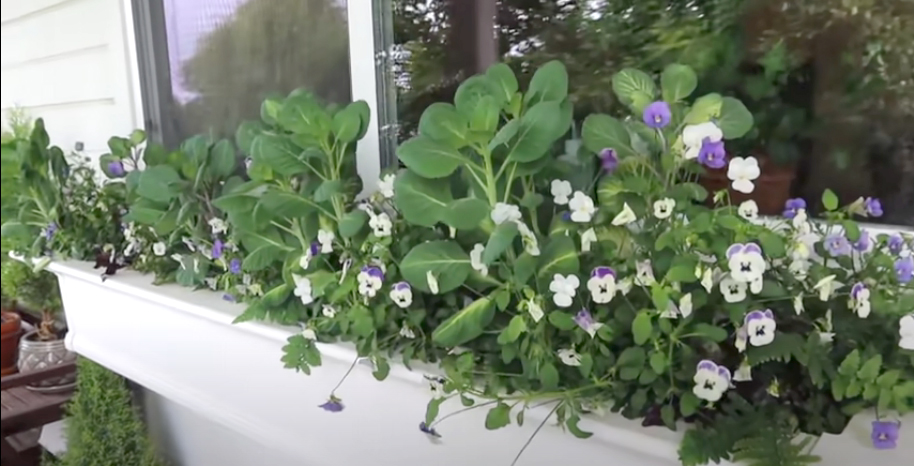 , Planting a Shade Window Box, Redwood Nursery & Garden Center