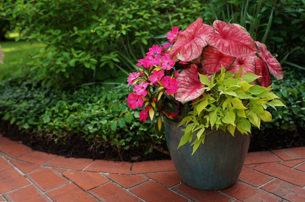 , HOW TO GROW TROPICAL PLANTS IN CONTAINERS, Redwood Nursery & Garden Center
