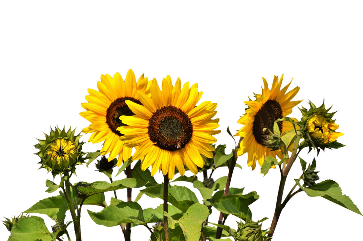, Cutting Flowers & Planting More Fall Crops!, Redwood Nursery & Garden Center