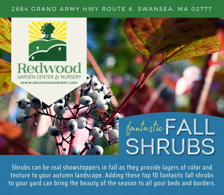 , Top 10 Fall Shrubs for your Landscape, Redwood Nursery & Garden Center