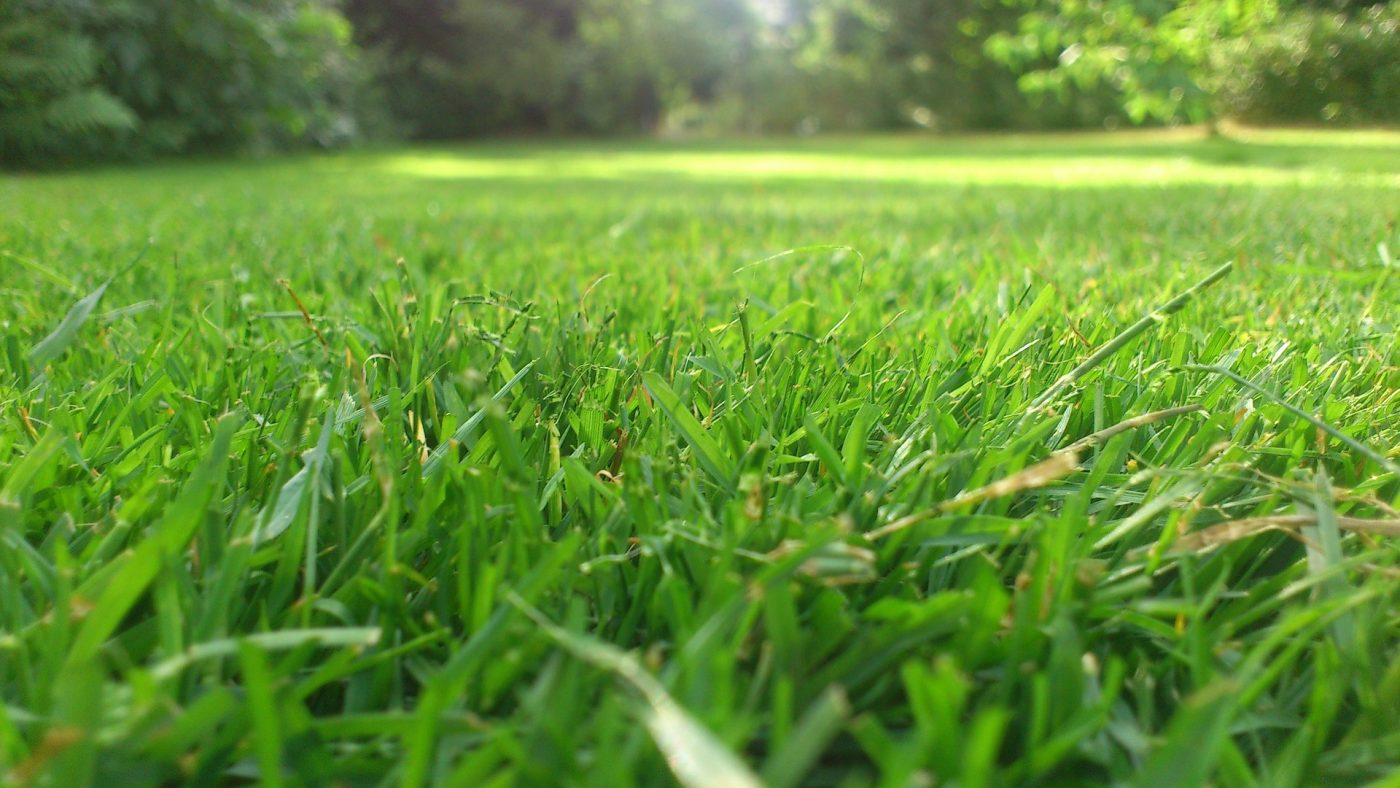 , Reseeding Your Lawn in the Fall, Redwood Nursery & Garden Center