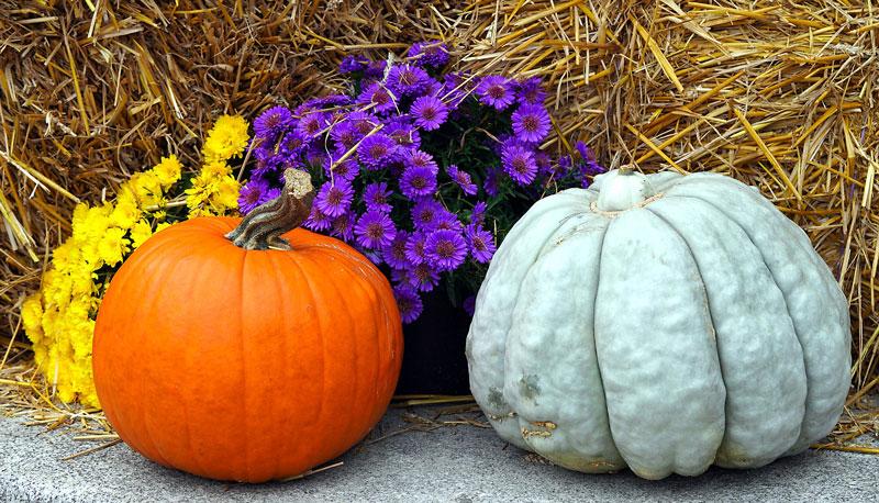 , Fall Front Porch Decorations, Redwood Nursery & Garden Center